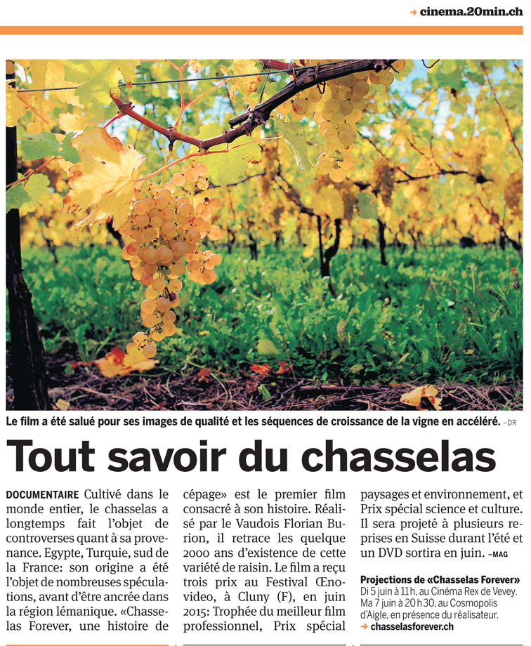 chasselas 20minutes_1